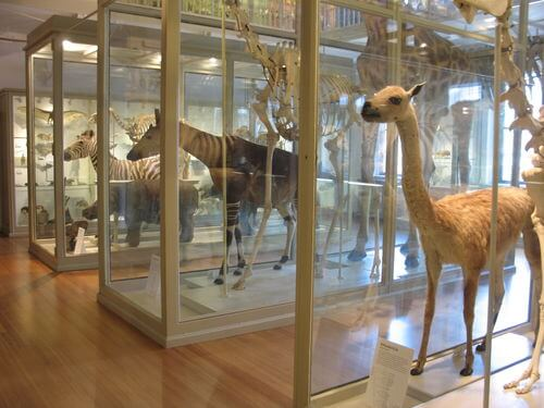 2-Harvard-Museum-of-Natural-History