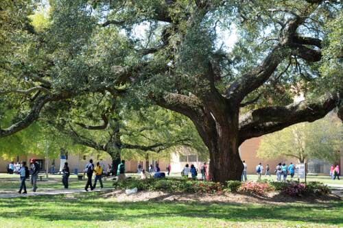 Southern University A&M – Online Master's in Public Administration